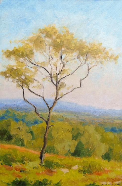 Tree on Bickerton Hill
