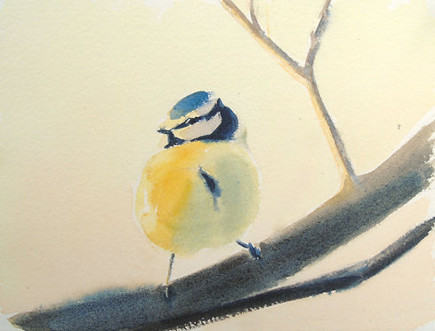 Blue Tit in the Evening