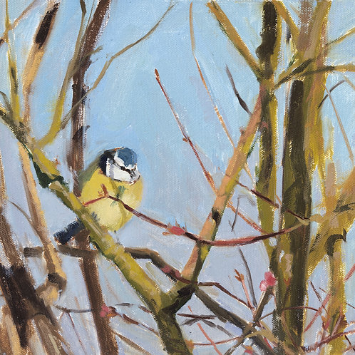 Blue Tit in Spring, Giclee Print