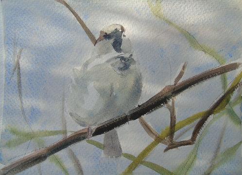 Tweeting Sparrow