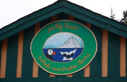 Molly Bawn Whale & Puffin Tours
