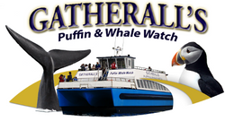 Gatherall's Puffin & Whale Watch