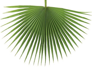 fan palm_edited.jpg