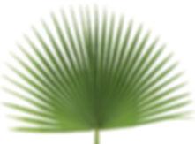 fan palm.jpg