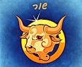bull-.jpg