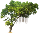 pngfind.com-tree-branches-png-11557.png