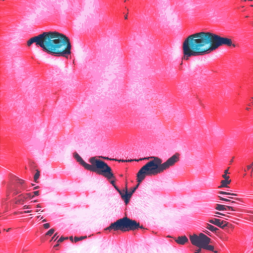 pink-lion-2-pink-safari-sabrina-rupprech