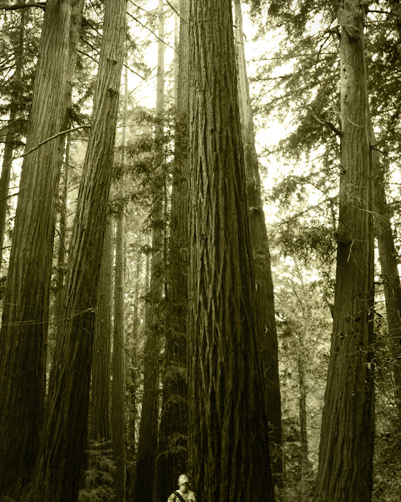 Hiking in the Redwoods - Big Sir, CA 2011