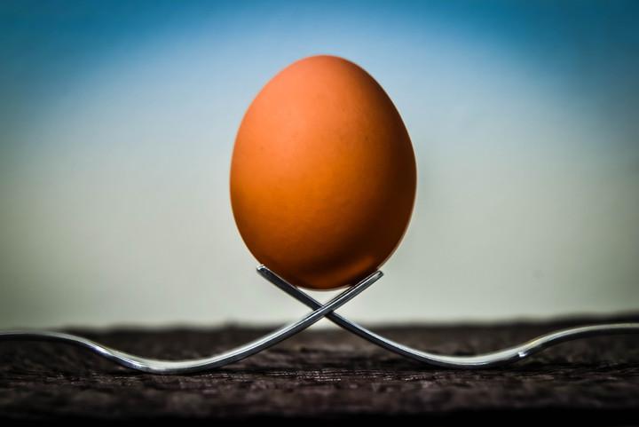 Egg & Fork