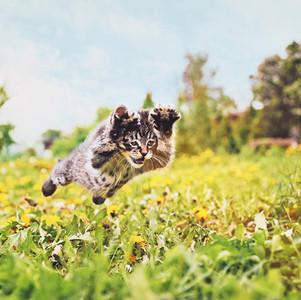 How To Calm A Hyper Kitten
