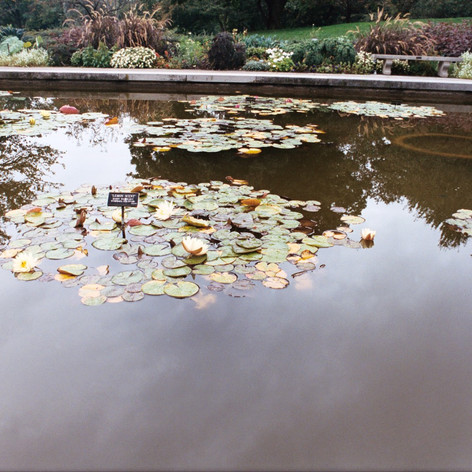 Brooklyn Botanic Gardens, NY