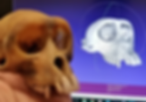 Macaque Skull 3d name.png