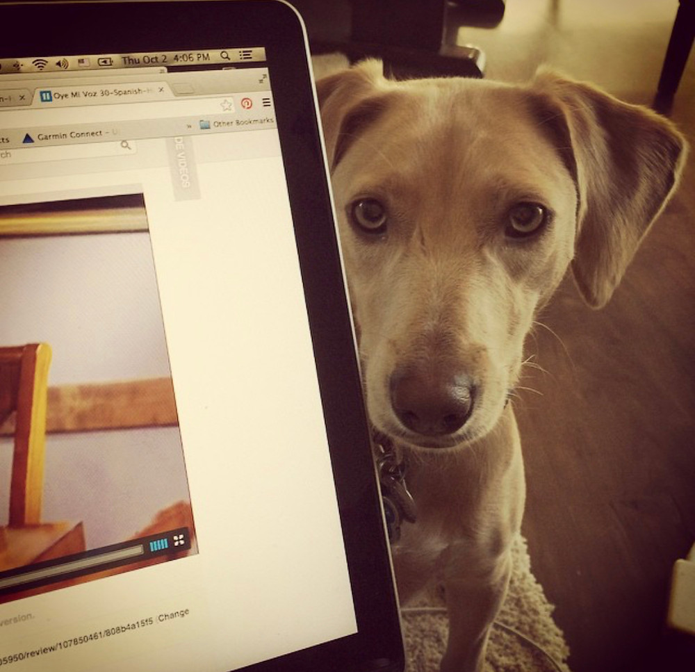 A blonde, floppy-eared puppy peeking out from behind a laptop screen