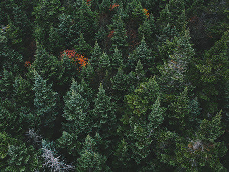 5 Ways to Utilize Evergreen Content During COVID-19