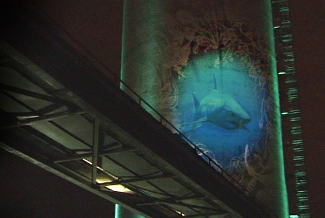 Big fish, 2007/2008