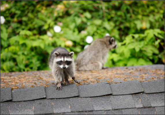 animals causing roof damage