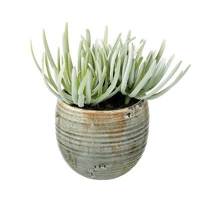 Artificial Crassula Plant In Green Pot