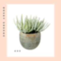 potted plant blog.png