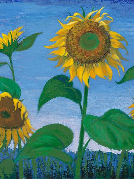 Evening Sunflowers