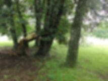 Greenkeeper_Baumschäden3.jpg