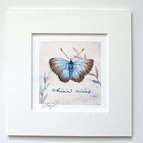 Aricia nicias / Original Painting 15x15cm
