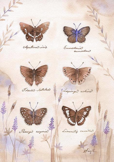Brown Winged Butterflies / Print A4