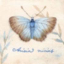 BluewingsSmall.jpg