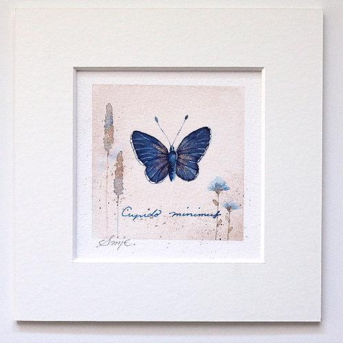 Cupido minimus / Original Painting 15x15cm