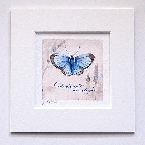 Celastrina argiolusi / Original Painting 15x15cm