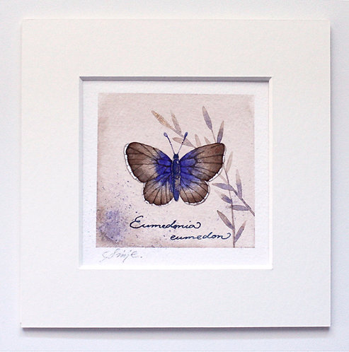Eumedonia eumedon / Original Painting 15x15cm