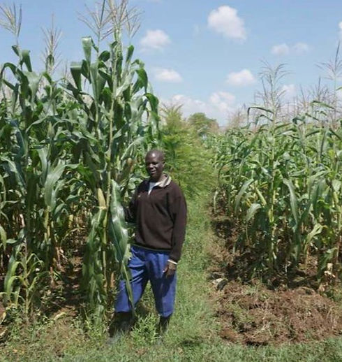 Maize%20comparison_edited.jpg