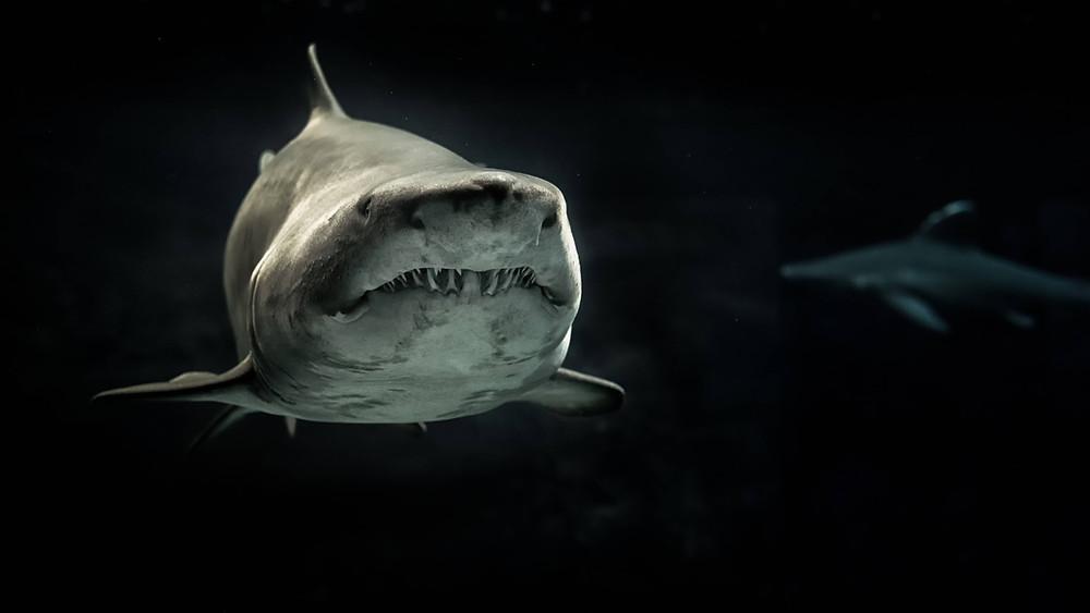 Quick Fact: Sharks do not have bones.
