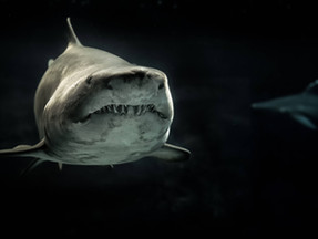 Shark Awareness Day, Facts you must know about the marine creature.
