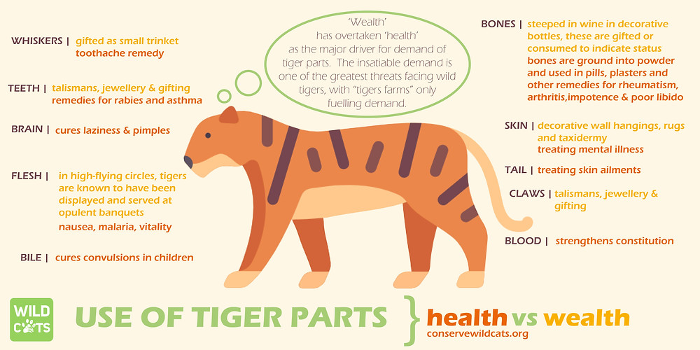 The tiger is used for a plethora of purposes