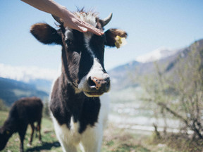Ditching Beef for the Environment