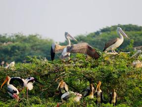 Assam Government seeks realignment of rail track through bird sanctuary