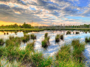 World Wetland Day 2021, Top 10 Facts You Must Know