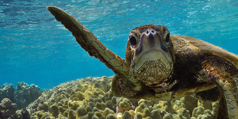 Turtles have been disappearing, courtesy to Climate Change and Human Activities