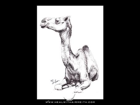 Spirit Animal - Camel