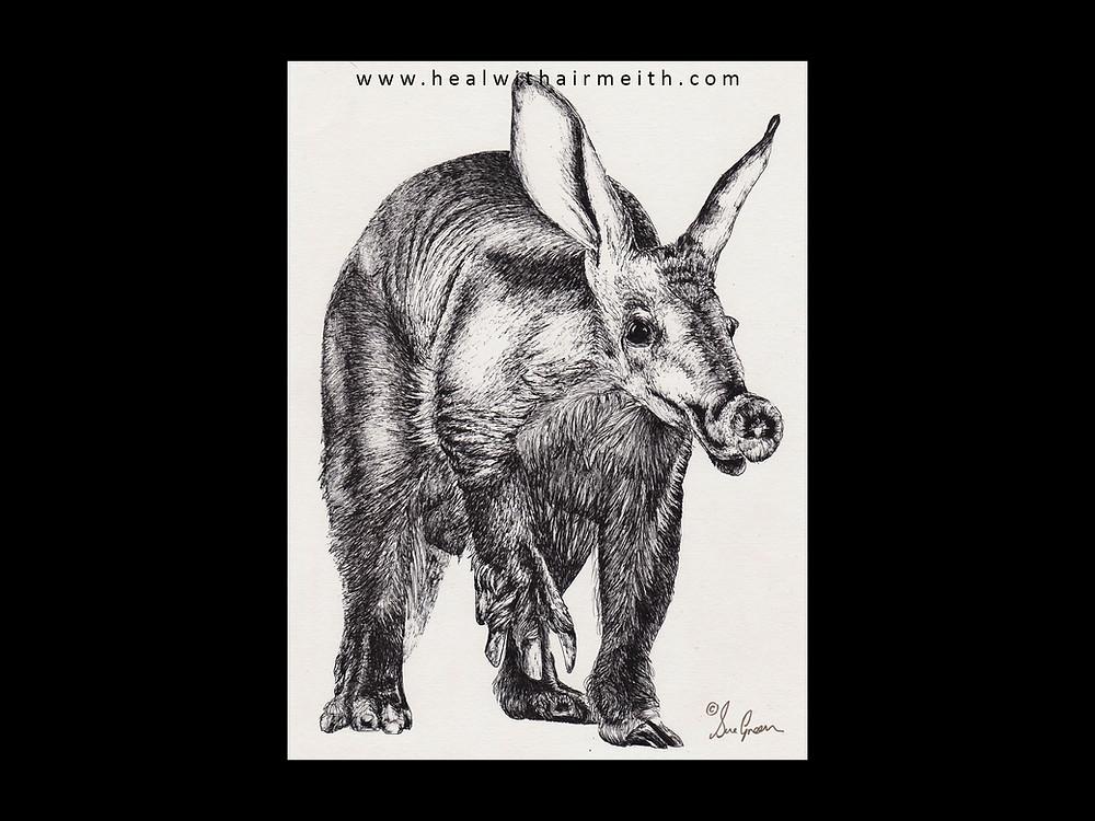 Spirit animal, aardvark