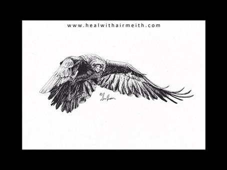 Spirit Animal - Raven