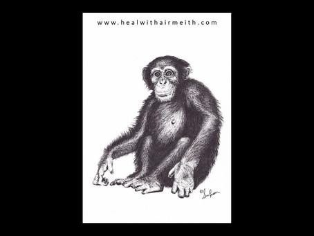 Spirit Animal - Chimpanzee