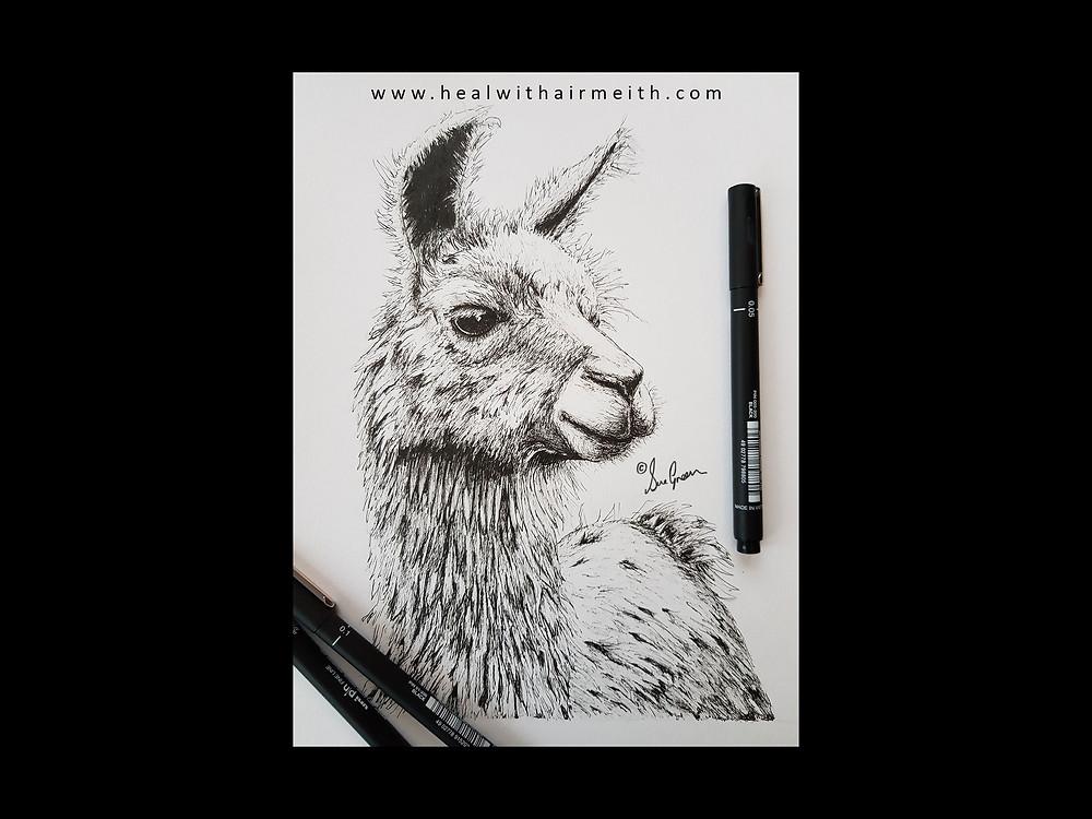 Spirit animal, llama