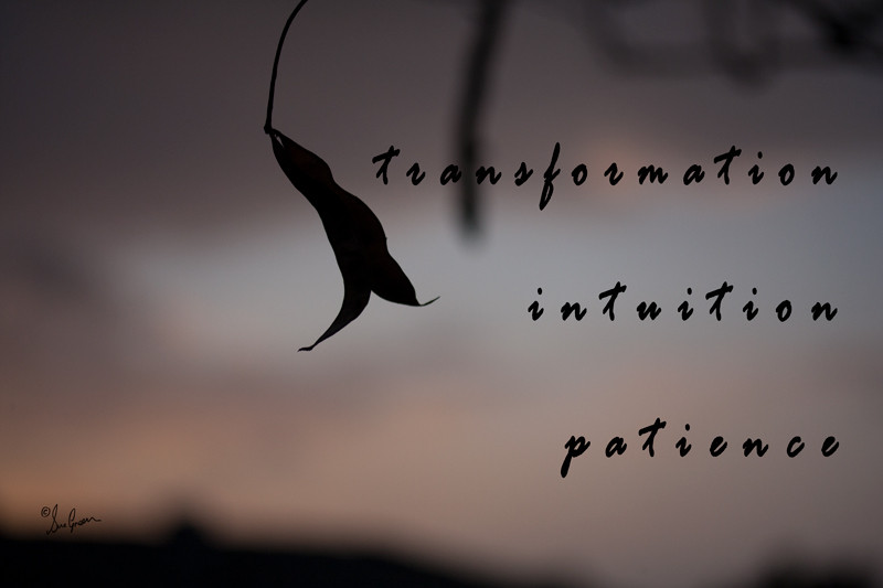 transformation, intuition and patience
