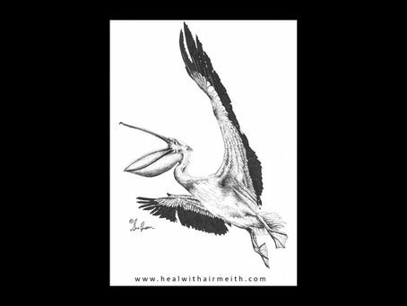 Spirit Animal - Pelican