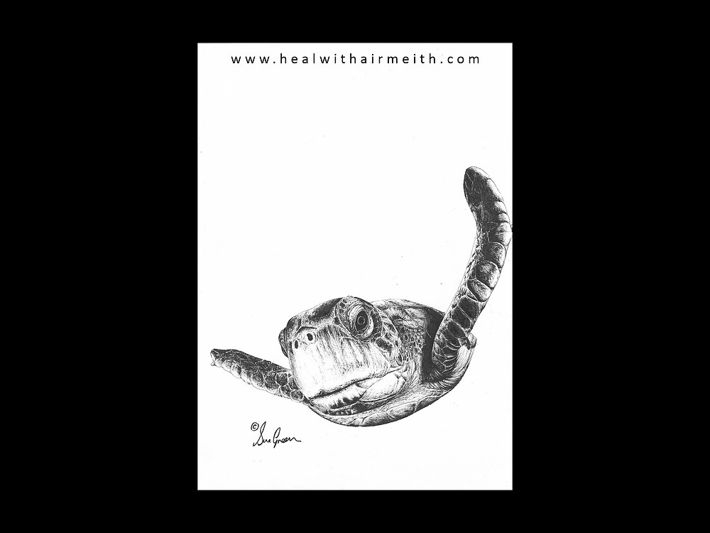Spirit animal - turtle