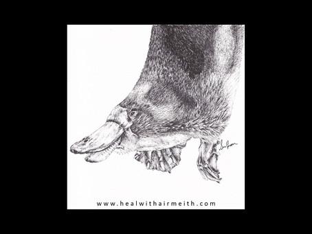 Spirit Animal - Platypus
