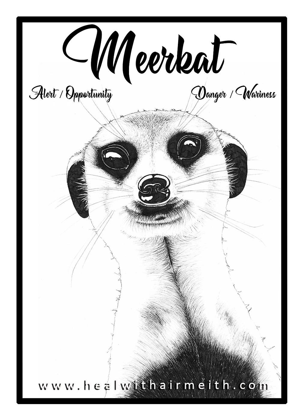 Meerkat, power animal