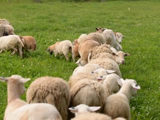 Roasted Lamb Over Rosemary