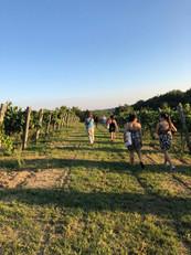 Walking the Vineyard